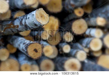 Stack Of Birch Tree Logs