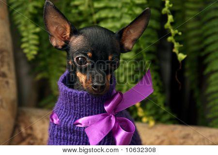 Liitle dog