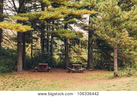 Picnic Benches In A Park During The Summer