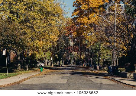 Streets Of Toronto During The Fall