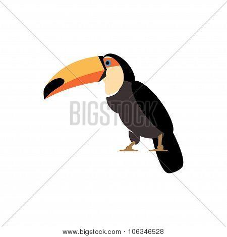 Toucan Vector Illustration