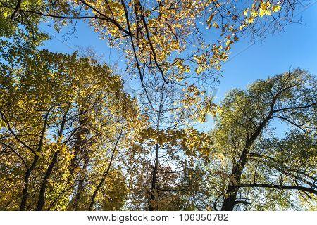 Autumn tree against sky