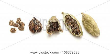 Pod to seeds of Organic Cardamom.