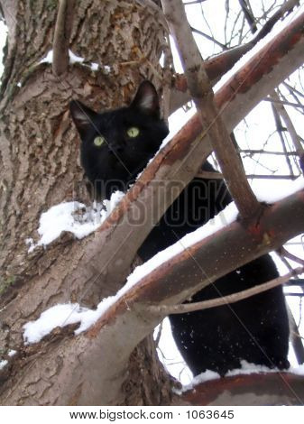 Winters Cat