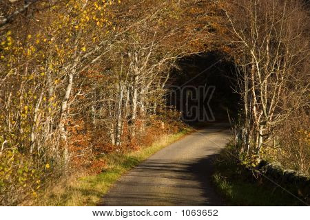 Country Lane Tunnel