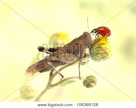 grasshopper and ladybug together on a yellow flower