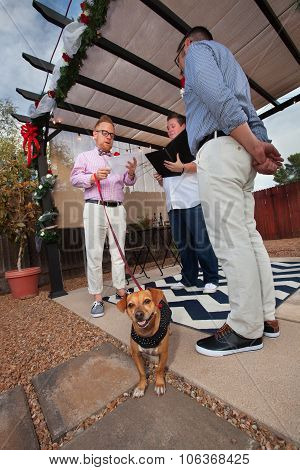 Dog In Gay Wedding