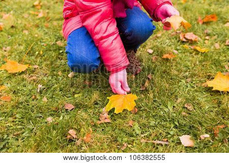 autumn, childhood, season and people concept - close up of little girl collecting fallen maple leaves outdoors