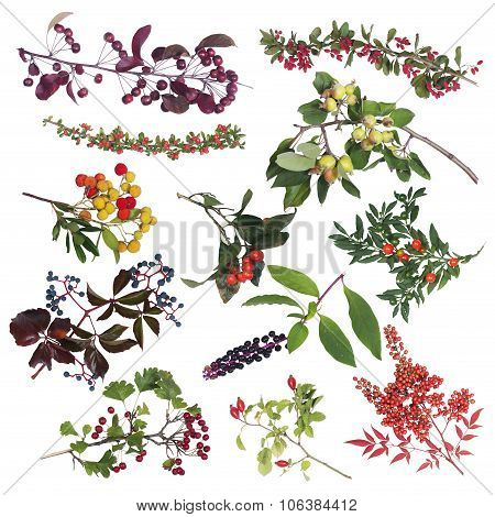 set of edible and inedible autumn berries