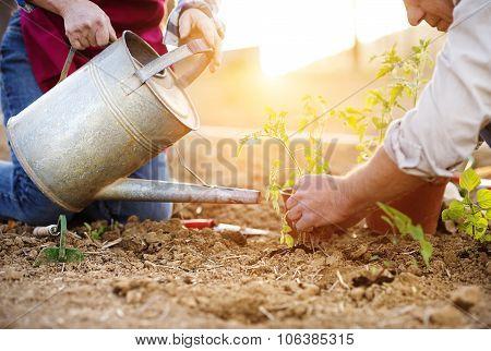 Senior in their garden