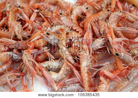 Norway Lobsters