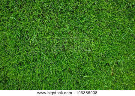 Green Grass Background Texture.