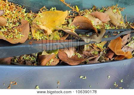 Dry leaves and small white flowers on windshield and windshield wiper
