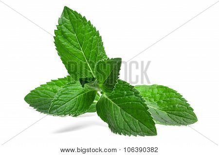 Fresh Mint Leaf Isolated On A White Background
