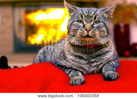 Gray Cat  and a fireplace.