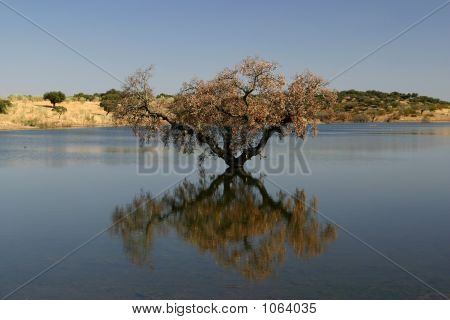 Tree In The Lake