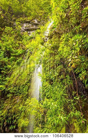 Waterfall And Greenish Forest Landscape, Madeira