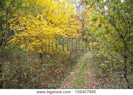 Dirt Road In Autumn Forest. Fallen Leaves Lays On Ground.