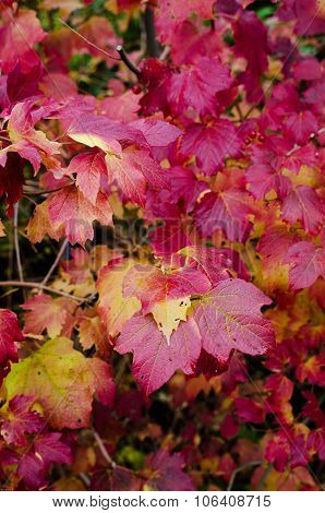 Autumn Leaf With Many Color
