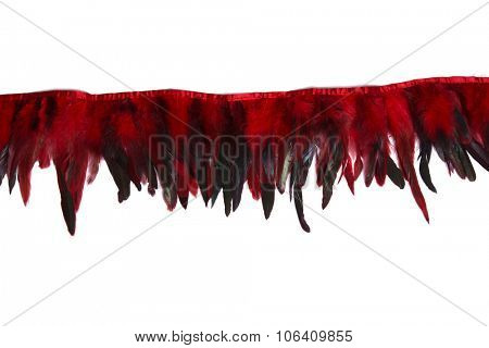 Red decorative rooster feathers, isolated on white background