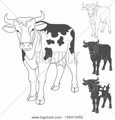 Vector black and white cow. Isolated objects