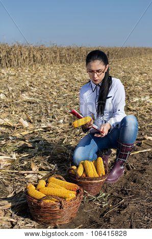 Woman Agronomist  In Corn Field