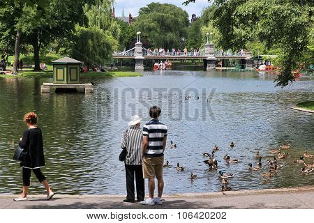 Ducks In Boston Common