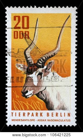 GDR - CIRCA 1970: a stamp printed in GDR shows White Antelope, Addax, Addax Nasomaculatus, Animal, circa 1970