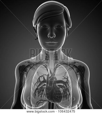 Female X-ray Respiratory System Artwork