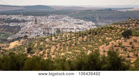 Town Of Montoro Surrounded By Olive Trees