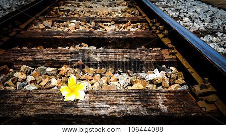 Train Track With Flower