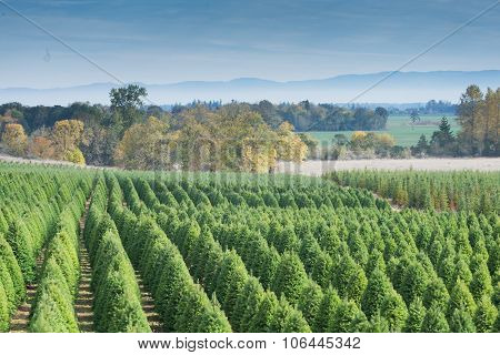 Tree Farm Landscape