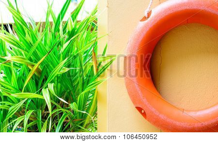 Lifebelt And Plant