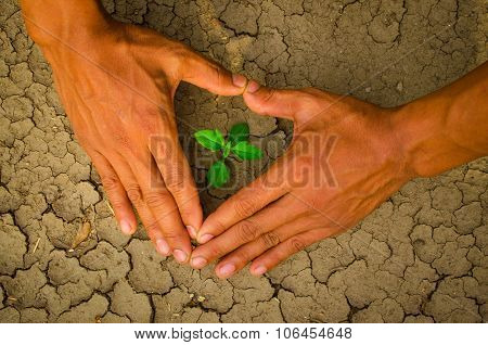 hands forming a heart shape around a tree growing on cracked ground