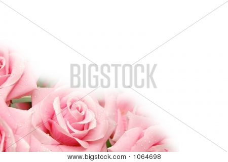 Roses With Water Drops  - Use Copyspace For Your Text