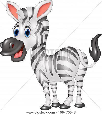 Cartoon cute zebra isolated on white background