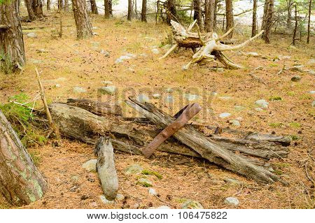 Debris In Forest