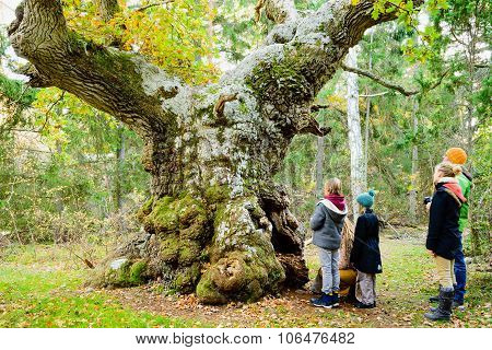 The Troll Oak