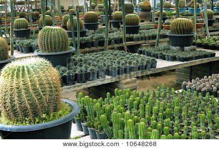 Cactus Breeding