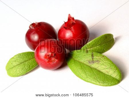 three fresh ripe cranberries or cowberries on white with leaves