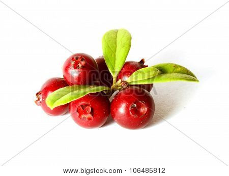 bunch of fresh ripe cranberries or cowberries on white