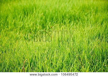 Closeup Of Green Lawn