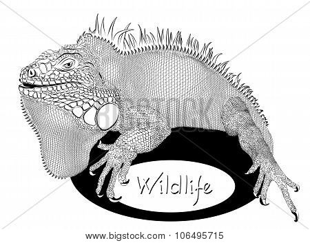 Salamander On Logo Of Wildlife