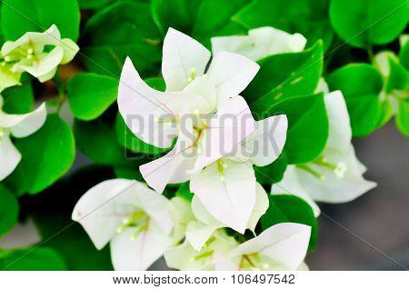 Kertas, Paper Flower