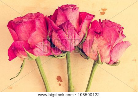 Dry Pink Roses On Old Paper Background