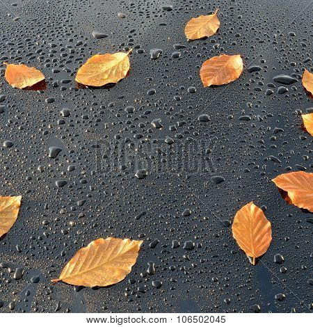 Water Drops on Polished Car paint with leafs