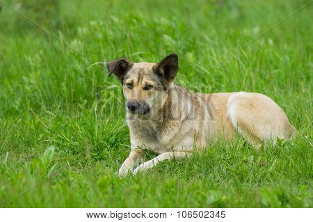 Adorable stray dog resting in spring grass