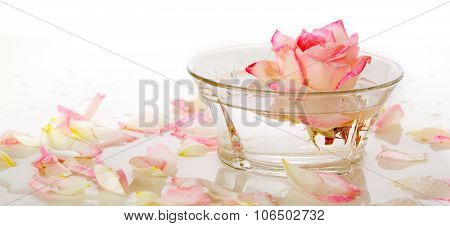 Pink Rose in a bowl of water