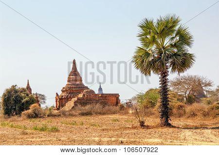 Bagan panorama with old pagoda