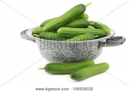 fresh green snack cucumbers in an enamel colander on a white background